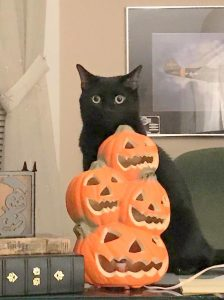 Pumpkin: Cat Tails