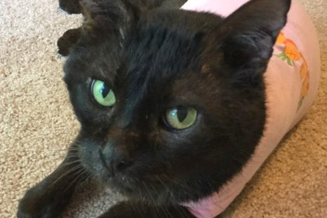 Happy Tails: Blackie (aka Mr. Man)