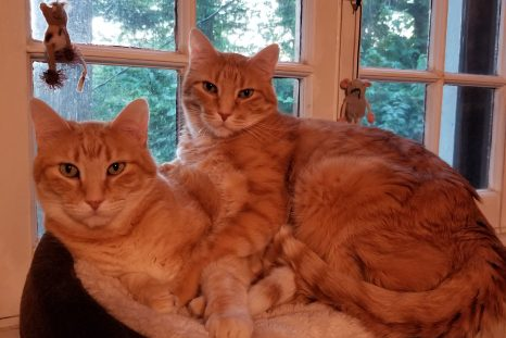 Happy Tails: Willie and Winkie (FIV+)