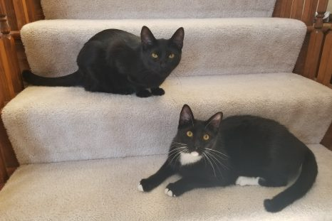 Happy Tails: Tux and Mew