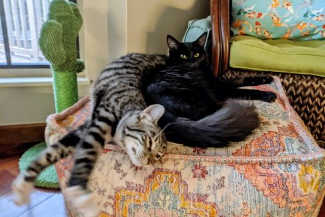 Happy Tails: Squee and Skittles (formerly Yakko and Wakko)